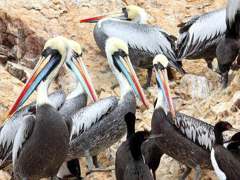 Tour Islas Ballestas + Playas de Paracas [Salidas Diarias]